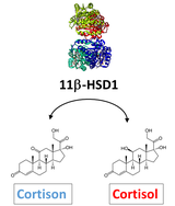 Cortions Cortisol 11bHSD1